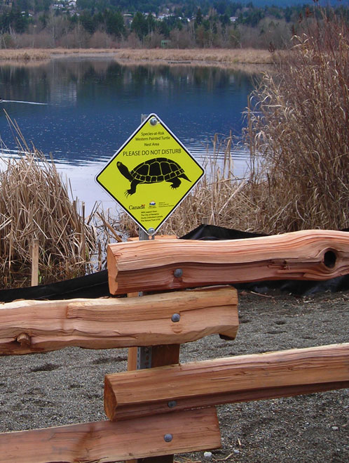 Western Painted Turtle signs Nanaimo